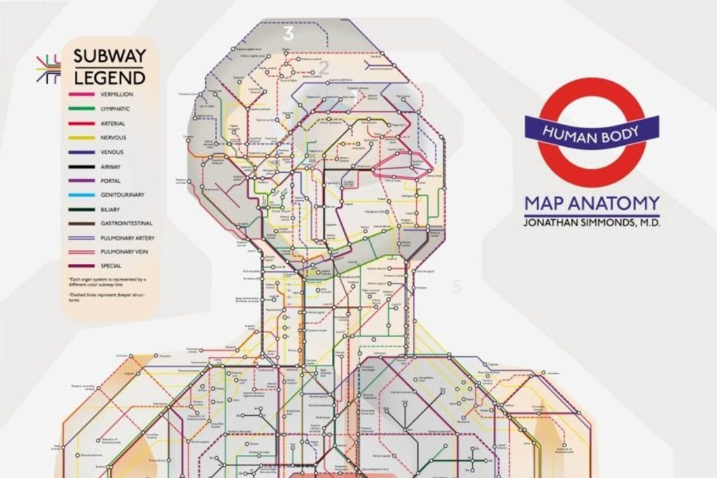 medical human tube map 1024x683 - Surgeon uses London Tube to inspire life-size human body map