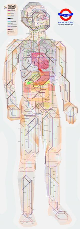medical human tube map3 - Surgeon uses London Tube to inspire life-size human body map